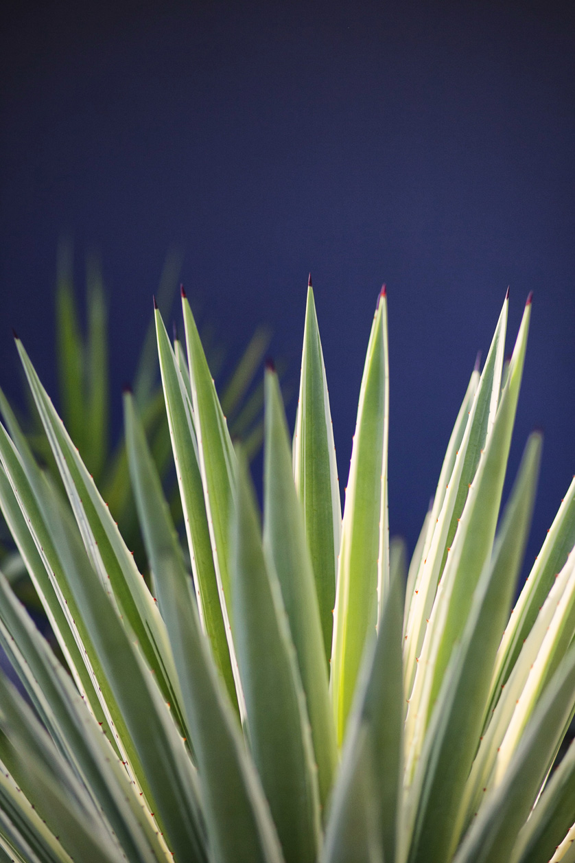 Palm_Springs_Photographer_Photography227